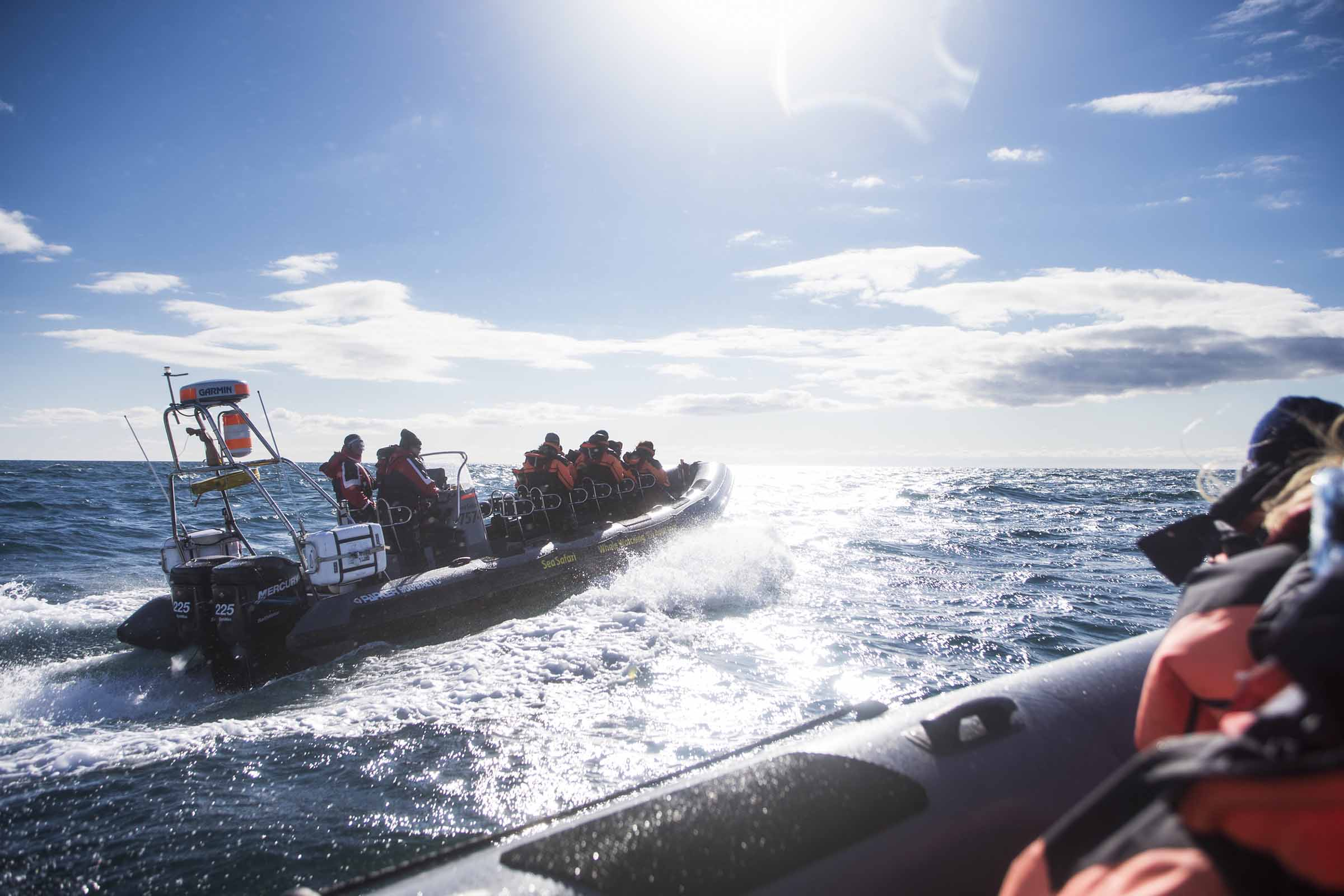 Sälsafari med RIB-Båt