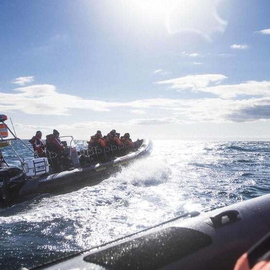 Sälsafari med RIB-Båt för två