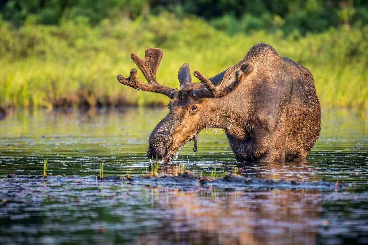 Safari i Sveriges Natur